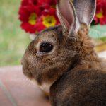 Karma dla królików